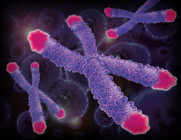 telomer