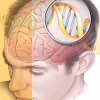 genes_brain1